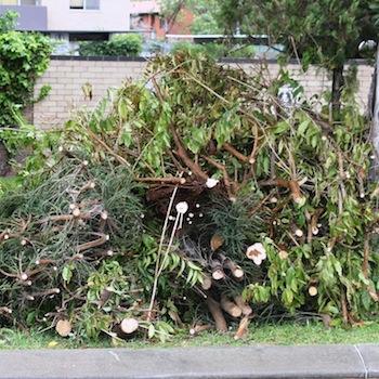 Wywóz odpadów zielonych Kraków
